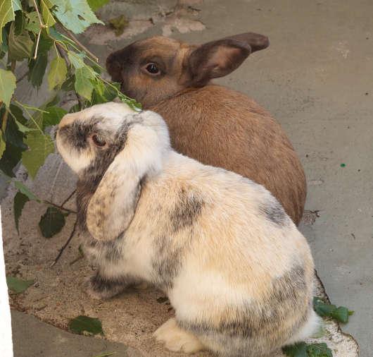 Übersetzung Kaninchen